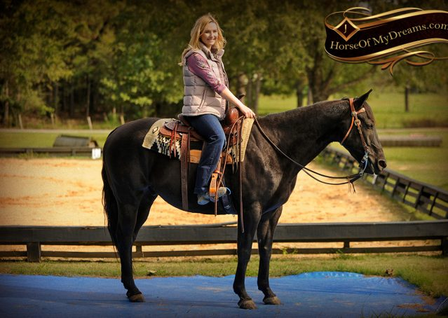 012-Frankie-Black-AQHA-Gelding-for-Sale