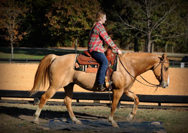 012-Torch-Red-Dun-AQHA-Gelding-For-Sale