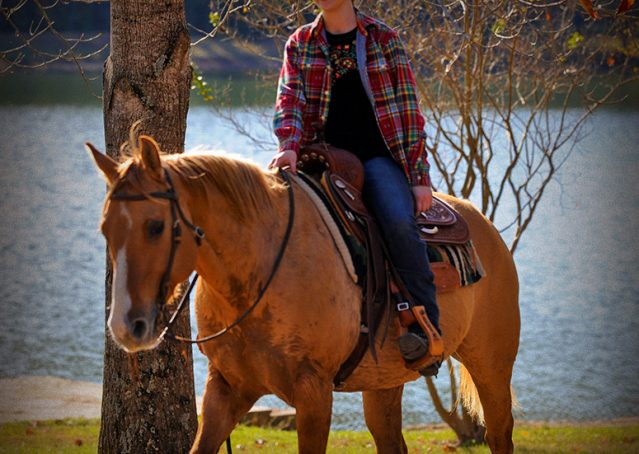 013-Torch-Red-Dun-AQHA-Gelding-For-Sale