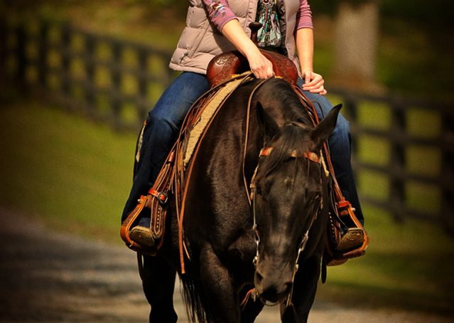 014-Frankie-Black-AQHA-Gelding-for-Sale