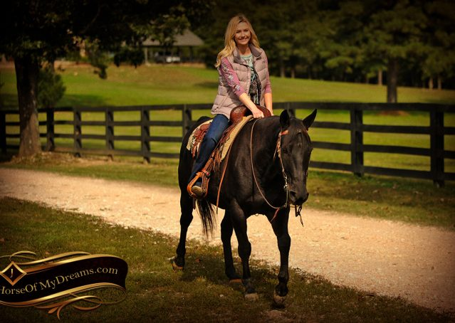 015-Frankie-Black-AQHA-Gelding-for-Sale