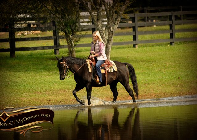 016-Frankie-Black-AQHA-Gelding-for-Sale
