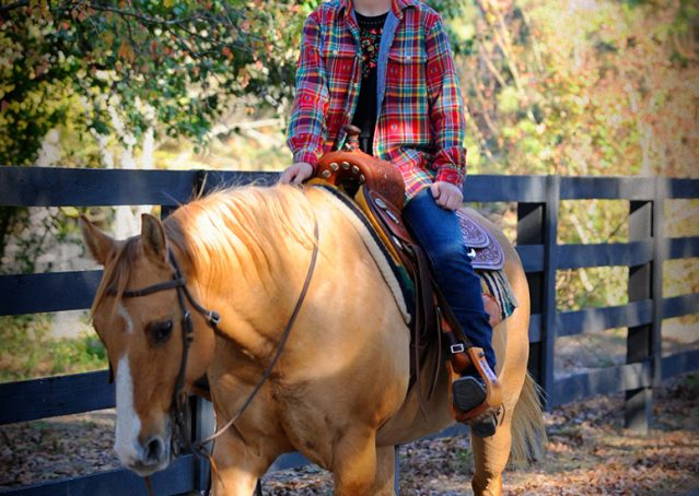 016-Torch-Red-Dun-AQHA-Gelding-For-Sale