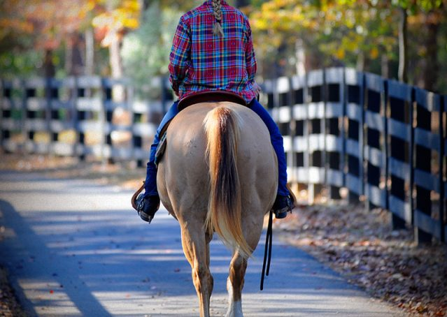 018-Torch-Red-Dun-AQHA-Gelding-For-Sale