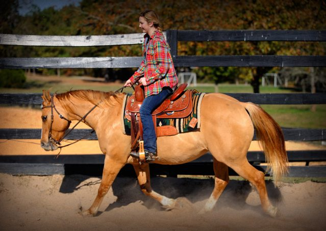 019-Torch-Red-Dun-AQHA-Gelding-For-Sale