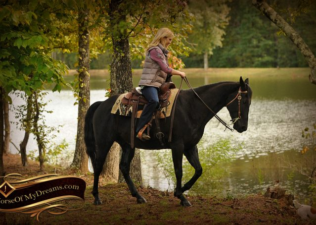 020-Frankie-Black-AQHA-Gelding-for-Sale