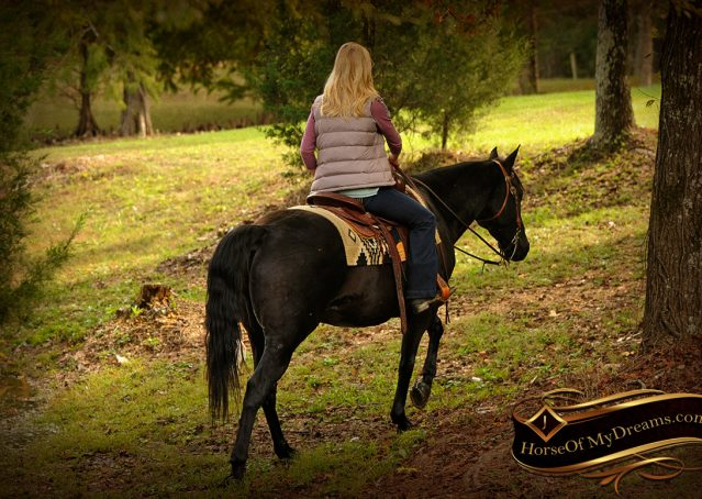 021-Frankie-Black-AQHA-Gelding-for-Sale