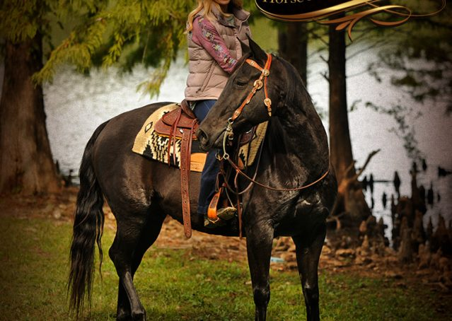 022-Frankie-Black-AQHA-Gelding-for-Sale