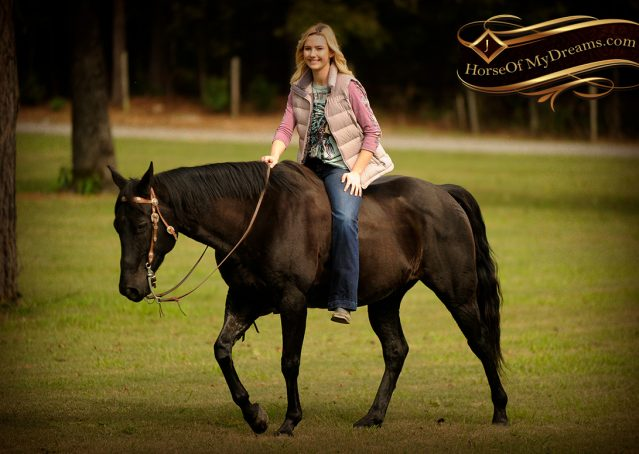023-Frankie-Black-AQHA-Gelding-for-Sale