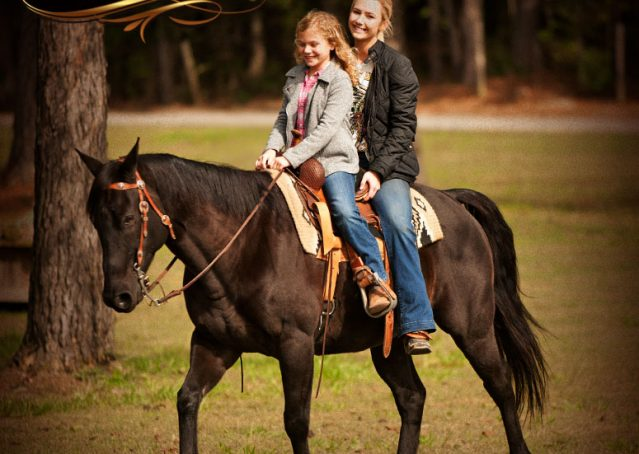025-Frankie-Black-AQHA-Gelding-for-Sale