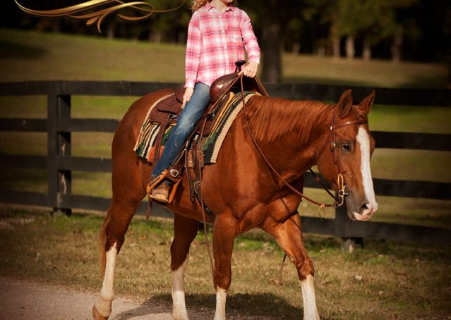026-Fancy-Sorrel-AQHA-mare-for-sale
