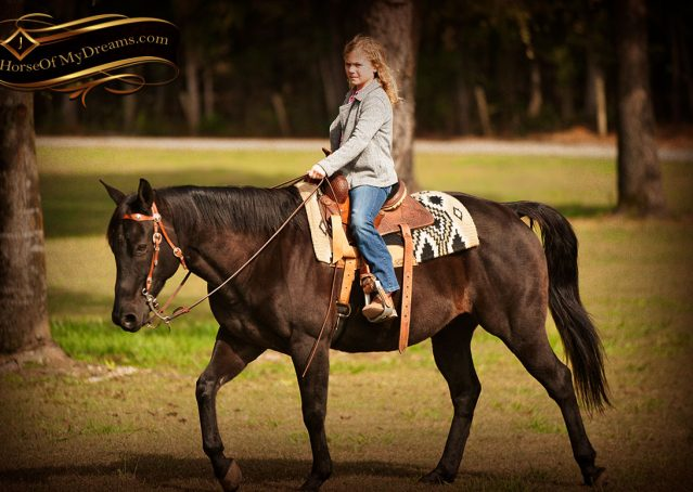 026-Frankie-Black-AQHA-Gelding-for-Sale