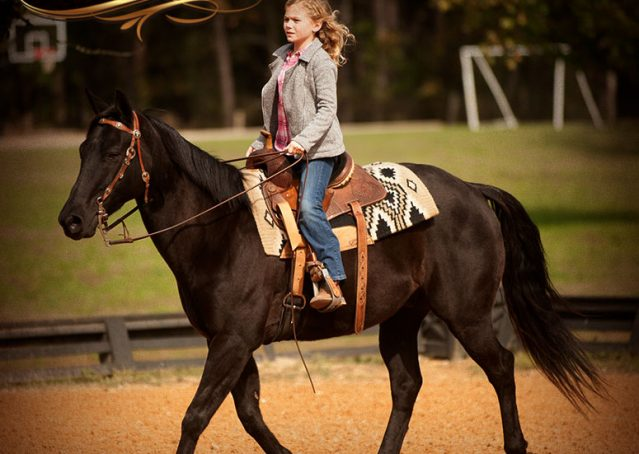 028-Frankie-Black-AQHA-Gelding-for-Sale