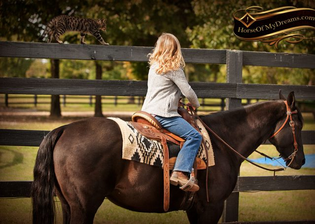 030-Frankie-Black-AQHA-Gelding-for-Sale