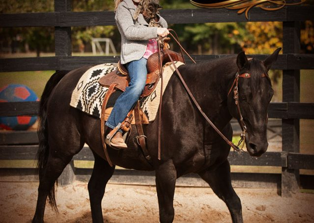 031-Frankie-Black-AQHA-Gelding-for-Sale