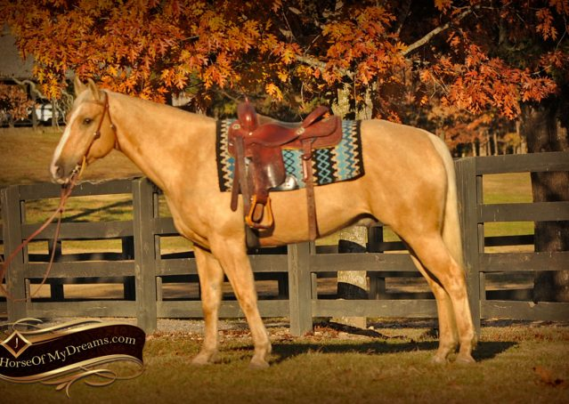 001-Jessy-AQHA-Palomino-Gelding-For-Sale