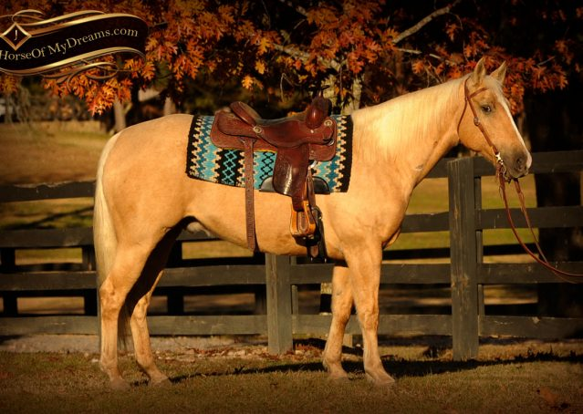003-Jessy-AQHA-Palomino-Gelding-For-Sale