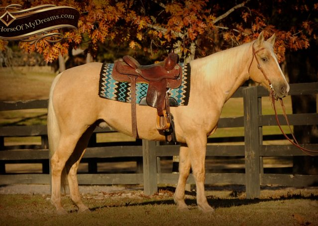 003a-Jessy-AQHA-Palomino-Gelding-For-Sale
