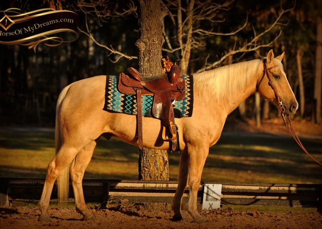 004-Jessy-AQHA-Palomino-Gelding-For-Sale