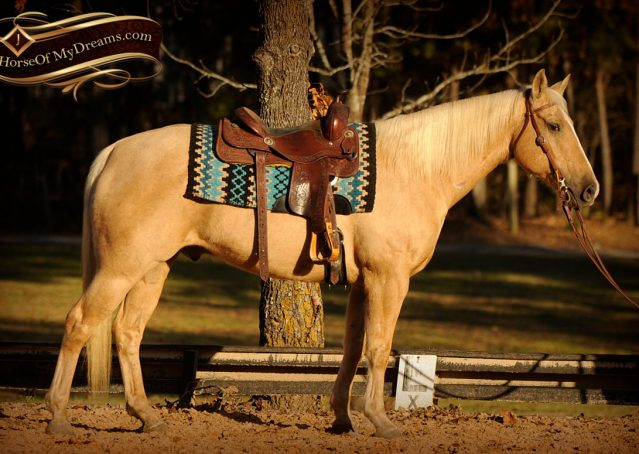 004a-Jessy-AQHA-Palomino-Gelding-For-Sale