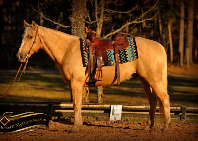 005-Jessy-AQHA-Palomino-Gelding-For-Sale