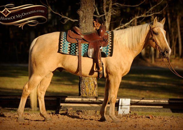 005a-Jessy-AQHA-Palomino-Gelding-For-Sale