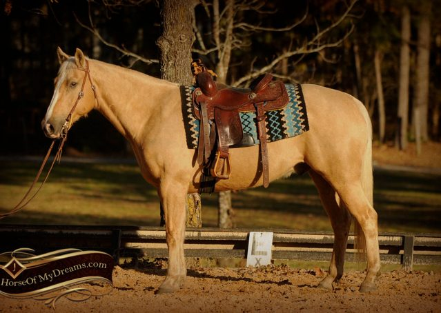 006-Jessy-AQHA-Palomino-Gelding-For-Sale