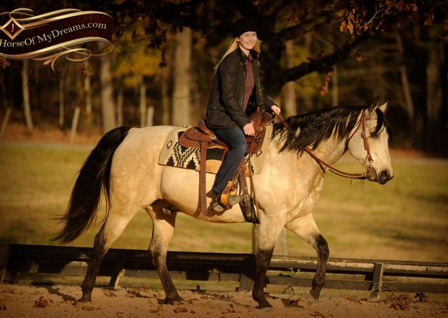 009-Quincy-Buckskin-AQHA-Gelding-For-Sale