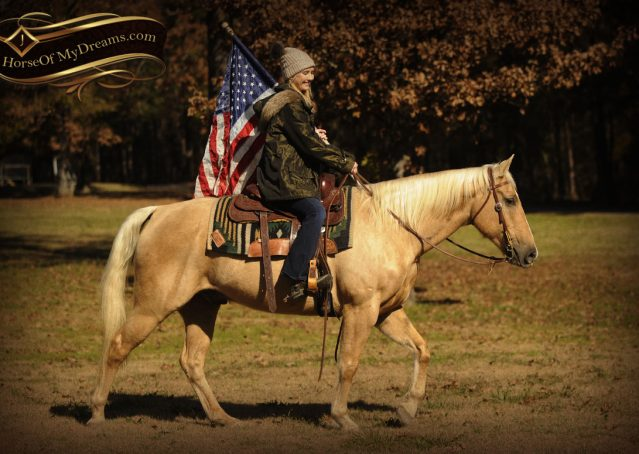 010-Jessy-AQHA-Palomino-Gelding-For-Sale