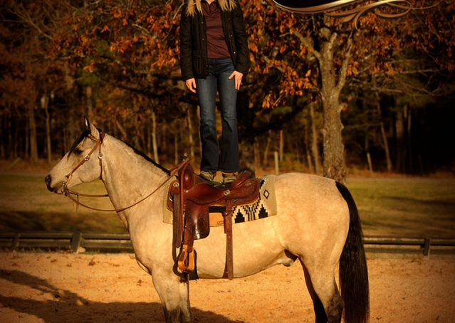 010-Quincy-Buckskin-AQHA-Gelding-For-Sale