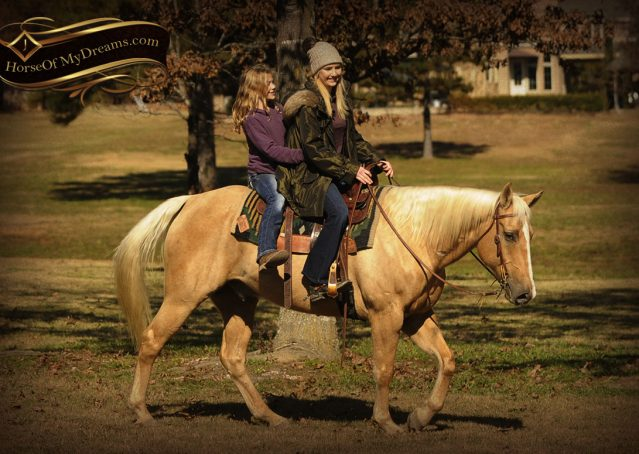 011-Jessy-AQHA-Palomino-Gelding-For-Sale
