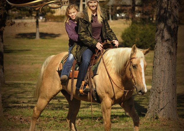 012-Jessy-AQHA-Palomino-Gelding-For-Sale