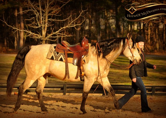 012-Quincy-Buckskin-AQHA-Gelding-For-Sale