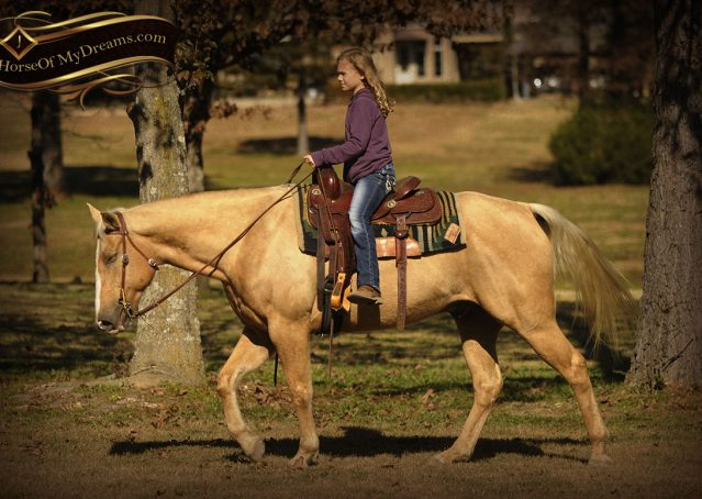 013-Jessy-AQHA-Palomino-Gelding-For-Sale