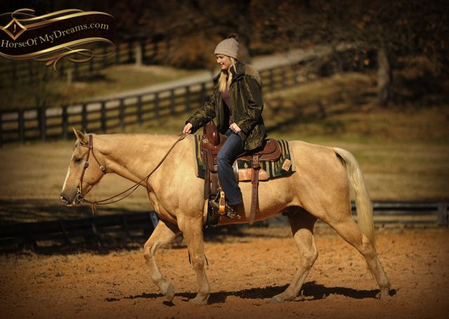 016-Jessy-AQHA-Palomino-Gelding-For-Sale