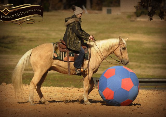 017-Jessy-AQHA-Palomino-Gelding-For-Sale