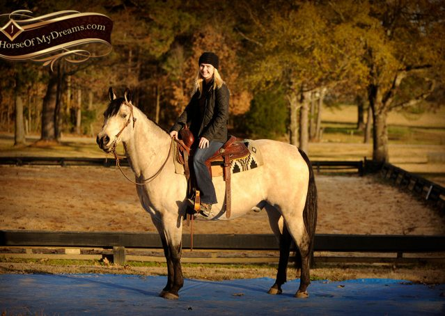 017-Quincy-Buckskin-AQHA-Gelding-For-Sale