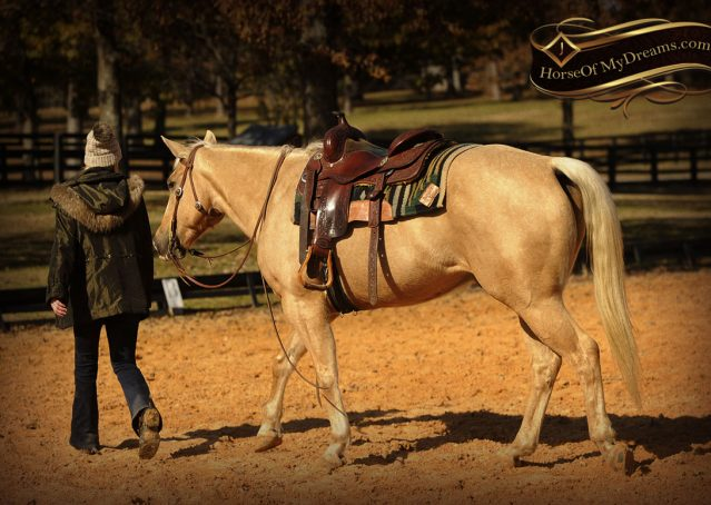 019-Jessy-AQHA-Palomino-Gelding-For-Sale