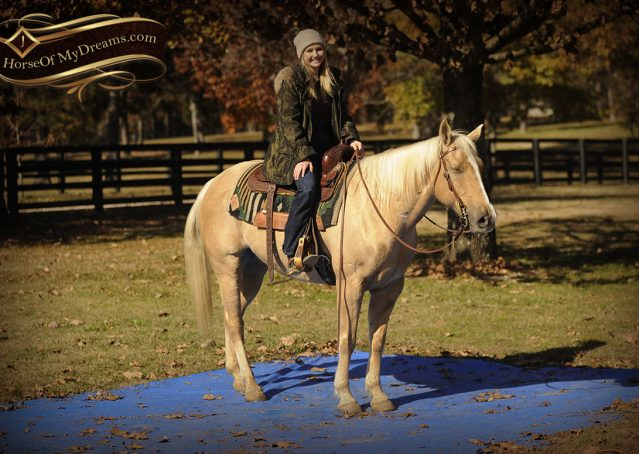021-Jessy-AQHA-Palomino-Gelding-For-Sale