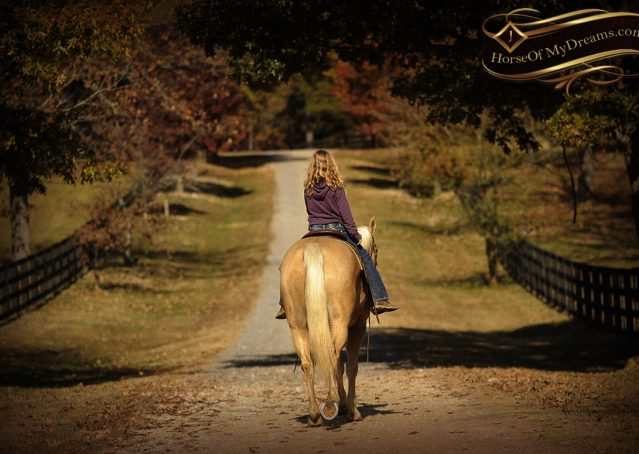 022-Jessy-AQHA-Palomino-Gelding-For-Sale