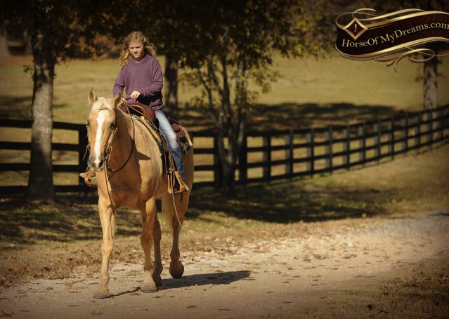 023-Jessy-AQHA-Palomino-Gelding-For-Sale
