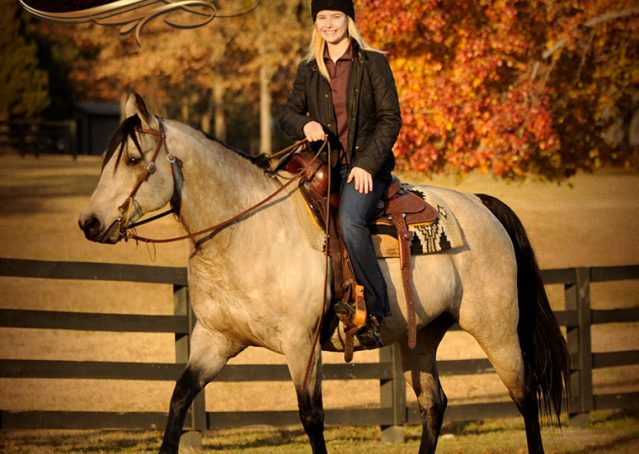 024-Quincy-Buckskin-AQHA-Gelding-For-Sale