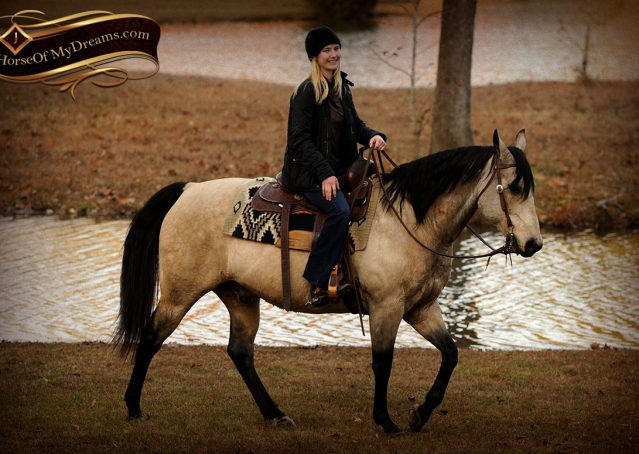 025-Quincy-Buckskin-AQHA-Gelding-For-Sale