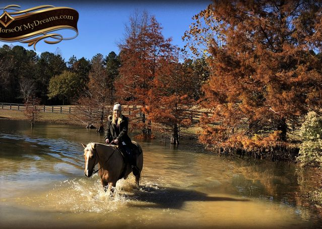 026-Jessy-AQHA-Palomino-Gelding-For-Sale