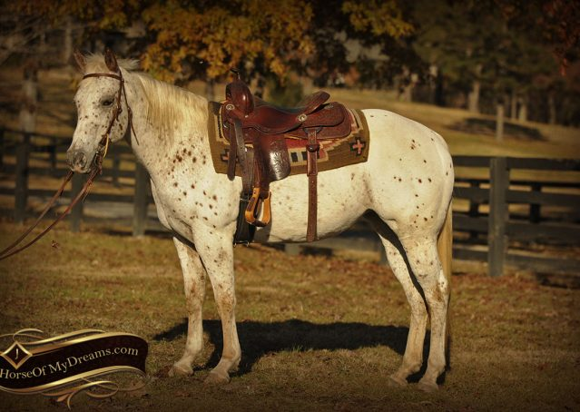 001-Lacey-Appaloosa-Mare-For-Sale