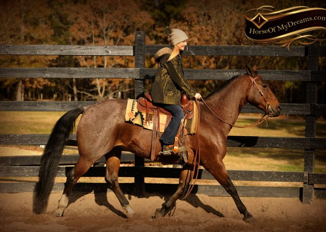 002-Rebel-AQHA-Bay-Roan-Gelding-For-Sale