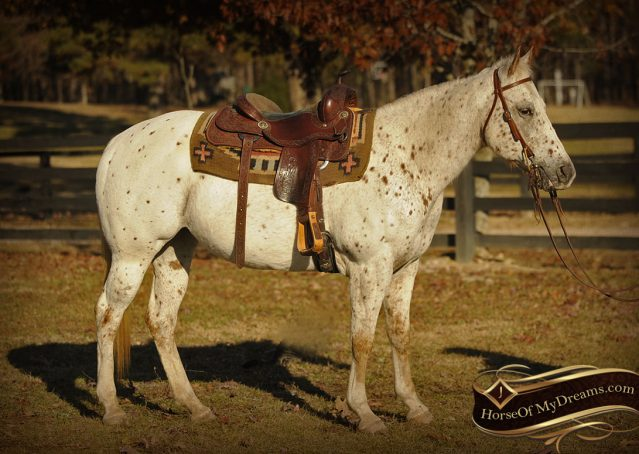 003-Lacey-Appaloosa-Mare-For-Sale
