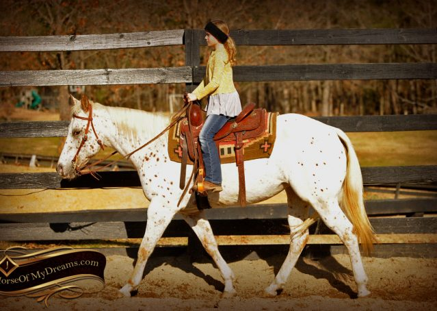 005-Lacey-Appaloosa-Mare-For-Sale