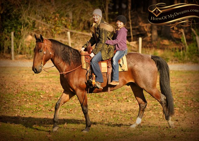 005-Rebel-AQHA-Bay-Roan-Gelding-For-Sale