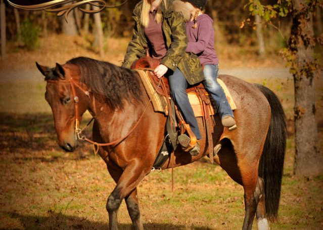 006-Rebel-AQHA-Bay-Roan-Gelding-For-Sale